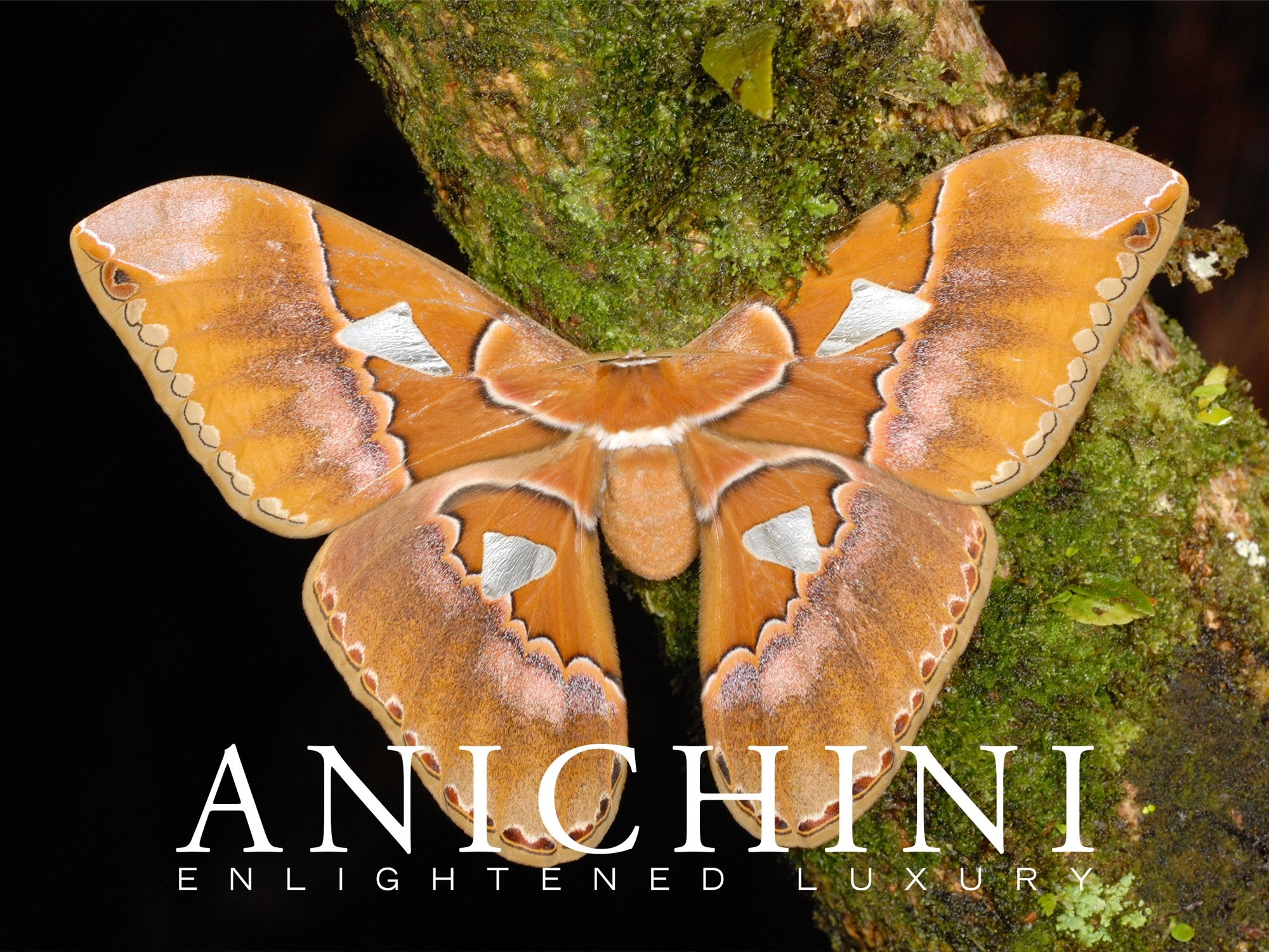 Anichini Silk Moth E-Gfit Card