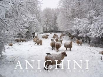 Anichini Merino Sheep E-Gfit Card