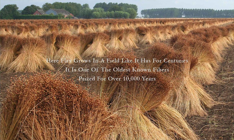 ANICHINI believes in Noble Materials - The Original Fibers - Flax Linen