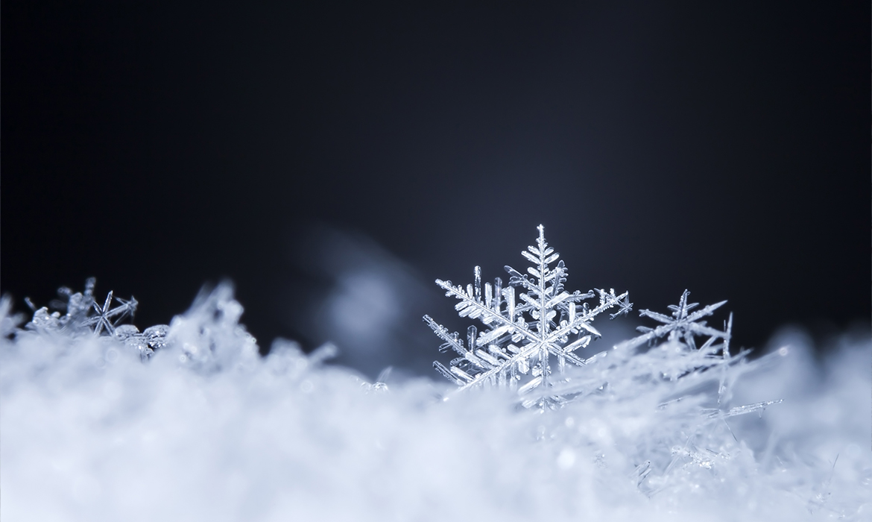 Anichini Snowflake Luxury Siberian Goose Down Pillows and Duvets